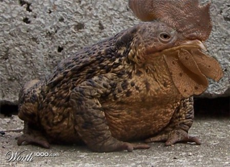 chicken-frog2 - What kind of creature is this? - Weird and Extreme